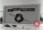 Image of sentry dogs San Antonio Texas USA, 1965, second 11 stock footage video 65675062012