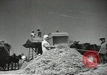 Image of Soviet farmers cutting and threshing stalks of grain during World War 2 Soviet Union, 1941, second 9 stock footage video 65675062264