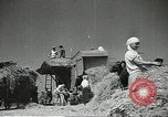 Image of Soviet farmers cutting and threshing stalks of grain during World War 2 Soviet Union, 1941, second 11 stock footage video 65675062264