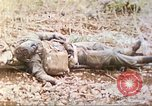 Image of United States Marines Mariana Islands, 1944, second 9 stock footage video 65675062597