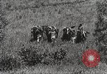 Image of Cavalry Rifle Platoon Kansas United States USA, 1933, second 11 stock footage video 65675062676