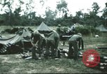 Image of 1st Cavalry troops South Vietnam, 1966, second 8 stock footage video 65675062769