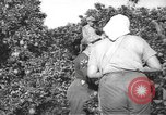 Image of Palestinian civilians Rehovot Palestine, 1938, second 4 stock footage video 65675062960
