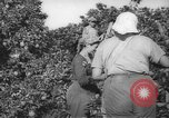 Image of Palestinian civilians Rehovot Palestine, 1938, second 5 stock footage video 65675062960