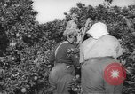 Image of Palestinian civilians Rehovot Palestine, 1938, second 9 stock footage video 65675062960