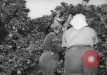 Image of Palestinian civilians Rehovot Palestine, 1938, second 10 stock footage video 65675062960