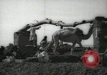Image of water wheel Egypt, 1938, second 5 stock footage video 65675062979