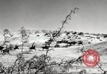 Image of 1st Cavalry Division Fort Bliss Texas USA, 1942, second 9 stock footage video 65675063100