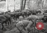 Image of 1st Cavalry Division Salem Oregon USA, 1942, second 8 stock footage video 65675063116