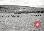 Image of 1st Cavalry Division Salem Oregon USA, 1942, second 2 stock footage video 65675063118