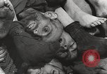 Image of victims of Nazi and Japanese atrocities in World War 2 Europe, 1945, second 9 stock footage video 65675063143