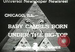 Image of baby camels Chicago Illinois USA, 1933, second 1 stock footage video 65675063205