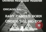 Image of baby camels Chicago Illinois USA, 1933, second 5 stock footage video 65675063205