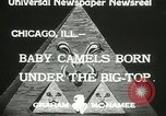 Image of baby camels Chicago Illinois USA, 1933, second 6 stock footage video 65675063205