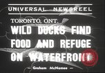 Image of wild ducks Toronto Ontario Canada, 1939, second 2 stock footage video 65675063633