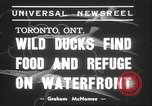 Image of wild ducks Toronto Ontario Canada, 1939, second 4 stock footage video 65675063633