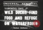 Image of wild ducks Toronto Ontario Canada, 1939, second 5 stock footage video 65675063633