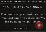 Image of nye of pheasants Buffalo New York USA, 1929, second 3 stock footage video 65675063700