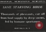 Image of nye of pheasants Buffalo New York USA, 1929, second 4 stock footage video 65675063700