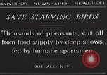 Image of nye of pheasants Buffalo New York USA, 1929, second 6 stock footage video 65675063700