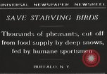 Image of nye of pheasants Buffalo New York USA, 1929, second 7 stock footage video 65675063700