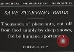 Image of nye of pheasants Buffalo New York USA, 1929, second 8 stock footage video 65675063700