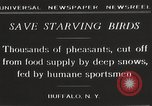 Image of nye of pheasants Buffalo New York USA, 1929, second 9 stock footage video 65675063700