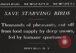 Image of nye of pheasants Buffalo New York USA, 1929, second 10 stock footage video 65675063700