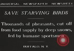 Image of nye of pheasants Buffalo New York USA, 1929, second 11 stock footage video 65675063700