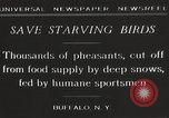 Image of nye of pheasants Buffalo New York USA, 1929, second 12 stock footage video 65675063700