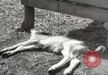 Image of drought Kansas City Missouri USA, 1934, second 11 stock footage video 65675063718