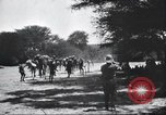 Image of herd of camels Egypt, 1920, second 5 stock footage video 65675063759