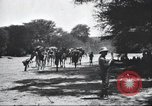 Image of herd of camels Egypt, 1920, second 7 stock footage video 65675063759