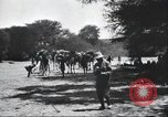 Image of herd of camels Egypt, 1920, second 8 stock footage video 65675063759
