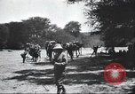 Image of herd of camels Egypt, 1920, second 9 stock footage video 65675063759