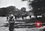 Image of herd of camels Egypt, 1920, second 10 stock footage video 65675063759