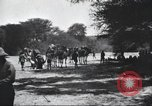 Image of herd of camels Egypt, 1920, second 11 stock footage video 65675063759