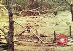 Image of 1st Tank Battalion Peleliu Palau Islands, 1944, second 10 stock footage video 65675063844