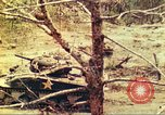 Image of 1st Tank Battalion Peleliu Palau Islands, 1944, second 12 stock footage video 65675063844