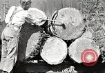 Image of lumber industry United States USA, 1922, second 10 stock footage video 65675063925