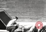 Image of workers in barn United States USA, 1920, second 1 stock footage video 65675063942
