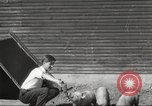 Image of workers in barn United States USA, 1920, second 7 stock footage video 65675063942