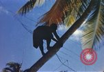 Image of Pacific islanders dancing, climbing trees, and repairing fish nets Pacific Theater, 1944, second 6 stock footage video 65675064073