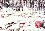 Image of 5th Marine Regiment Russell islands Solomon Islands, 1944, second 8 stock footage video 65675064090