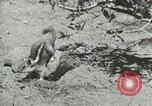 Image of Civilian Conservation Corps United States USA, 1939, second 2 stock footage video 65675064317