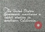 Image of fur industry Southern California USA, 1930, second 1 stock footage video 65675064362