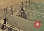 Image of Marijuana detection dogs San Diego California USA, 1975, second 3 stock footage video 65675064377