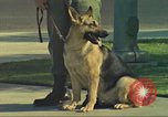 Image of Marijuana detection dog San Diego California USA, 1975, second 2 stock footage video 65675064378