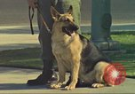 Image of Marijuana detection dog San Diego California USA, 1975, second 3 stock footage video 65675064378