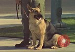 Image of Marijuana detection dog San Diego California USA, 1975, second 5 stock footage video 65675064378